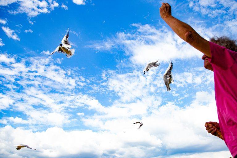 Möwenfüttering im Sommer, ein Mann wirft Brotkrumen in die Luft, die Möwen fangen sie im Flug